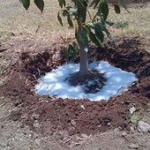 Nueva tecnología Agua en polvo para combatir las sequías - 10 gramos de este polimero puede absorber hasta un litro de agua.: https://buff.ly/3pUlzUg